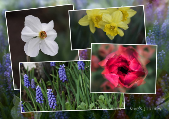 Spring flowers photo collage
