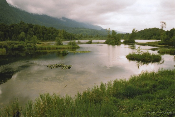 Photo of Cheam Lake Wetlands