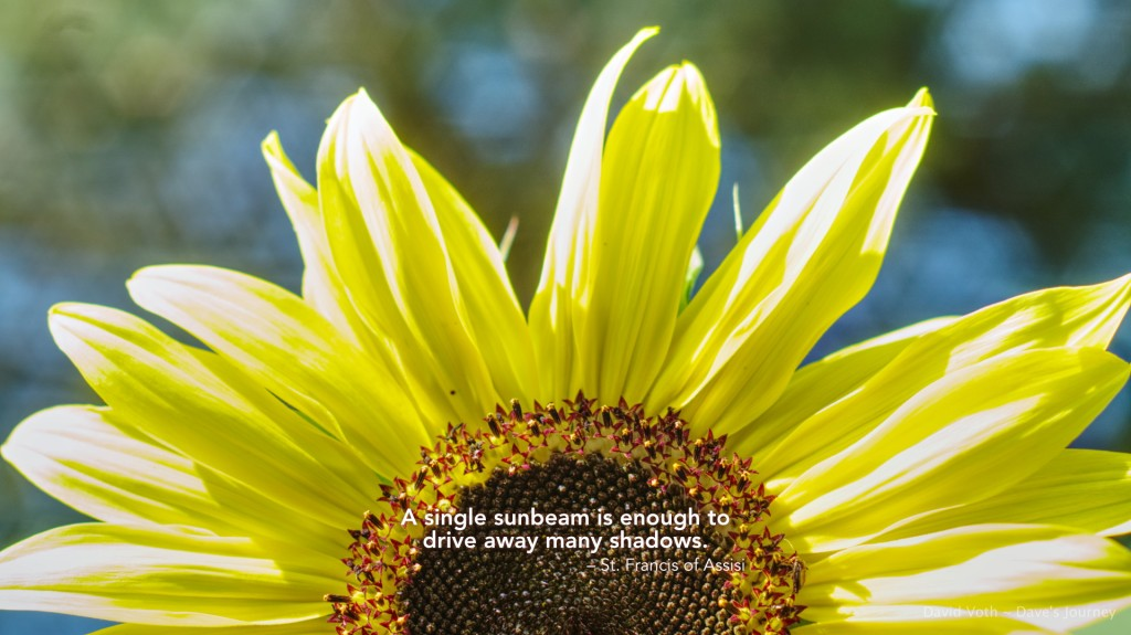 """Photo of sunflower with quote by St. Francis of Assisi """"A single sunbeam is enough to drive away many shadows."""""""