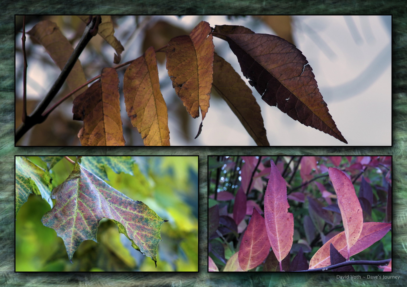 Photo collage of fall leaves