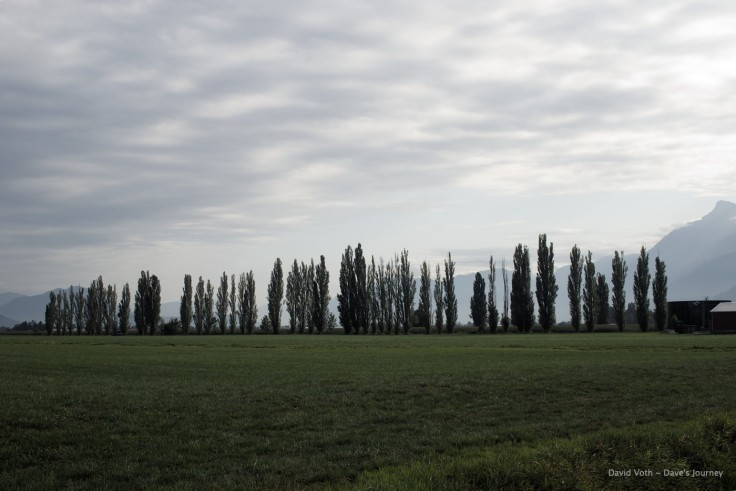 Photo of trees and fields